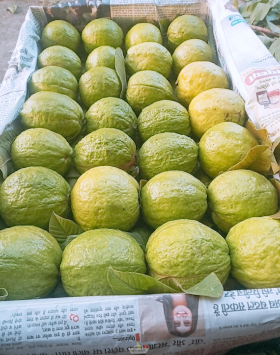 Fresh Guava Fruits from Aptso Mart Online Grocery Store