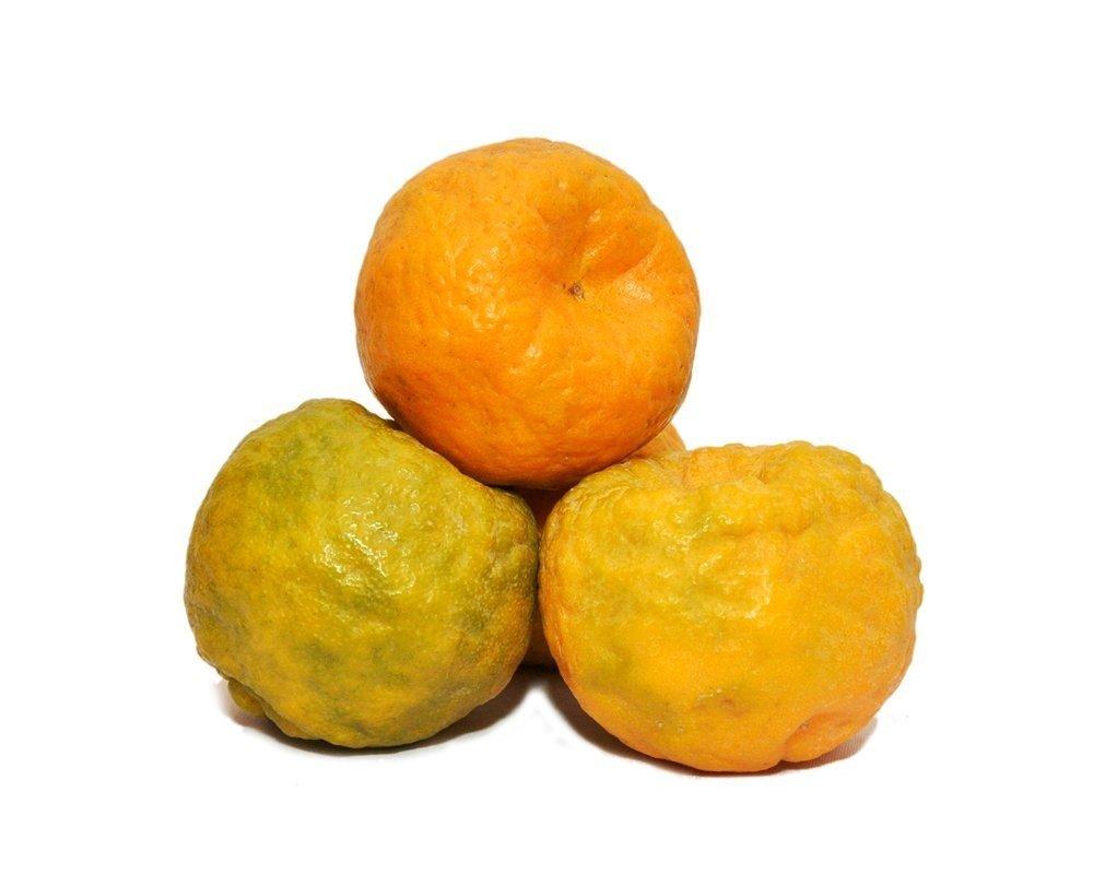 Nagpur Oranger