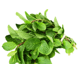 fresh-mint-pudina keerai